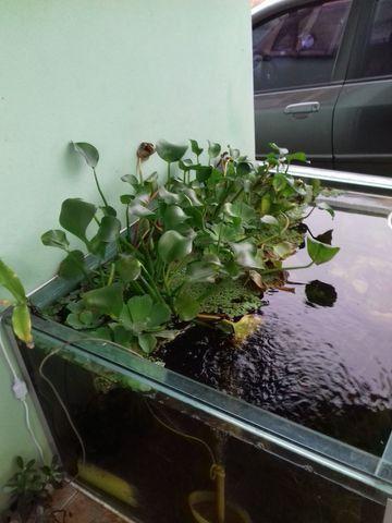 Aquário, plantas, móveis, acessórios - Foto 3