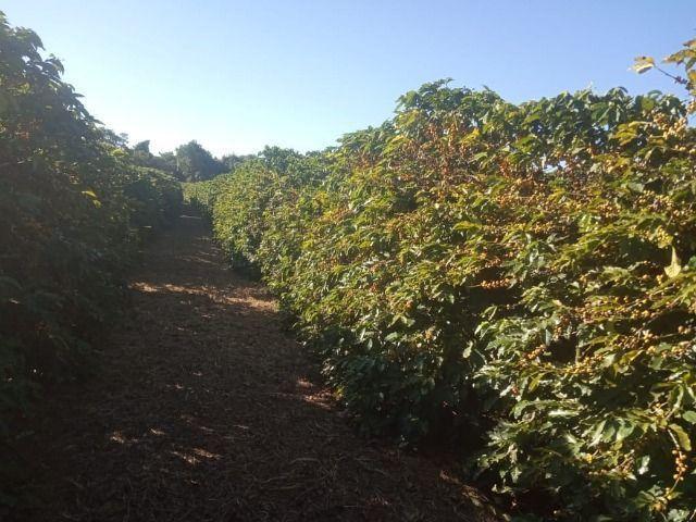 Fazenda em piumhi 55 alqueires 6.000.000.00 - Foto 4