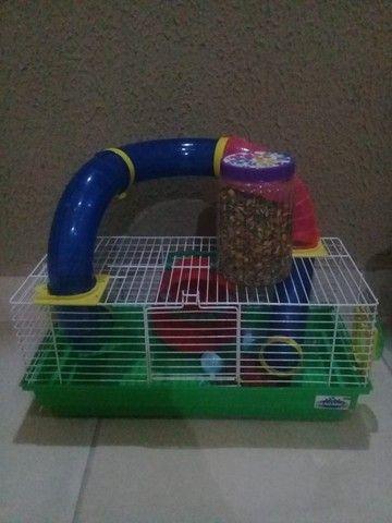 casinha grande hamster, valor 100,00