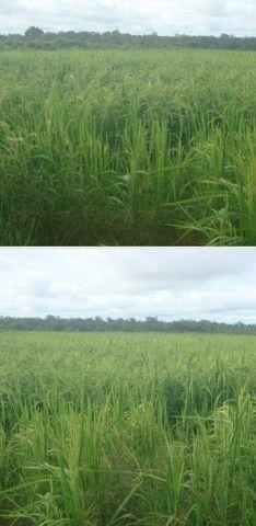 VENDA | Fazenda, em ZONA RURAL, Alto Boa Vista - Foto 20