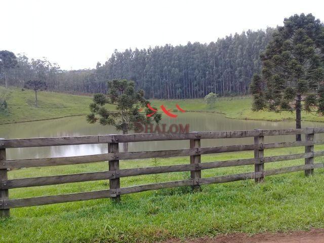 8051 | fazenda à venda em fazenda pinhão, pinhão - Foto 2