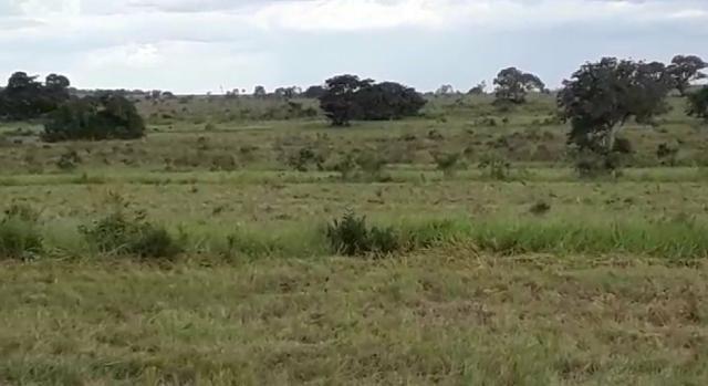 Fazenda de 853 hectares .400 hectares mecanizados . Colinas do Tocantins- TO - Foto 6