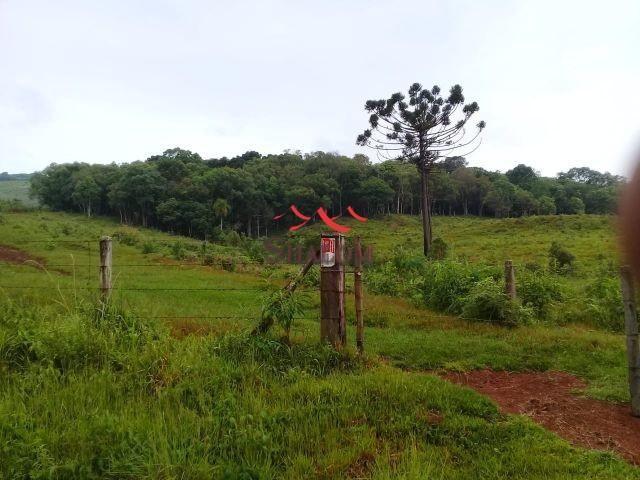 8051 | fazenda à venda em fazenda pinhão, pinhão - Foto 10