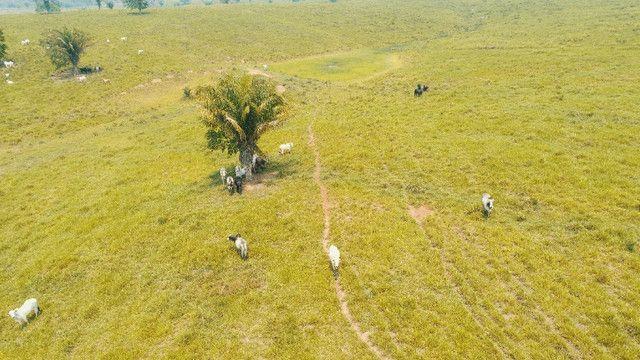 Fazenda próxima de Rio Branco - Acre - Foto 4