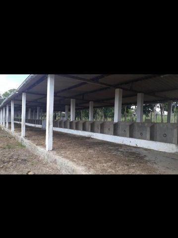Linda Fazenda com 150 Hectares estruturada na Região de Macaiba - Foto 18