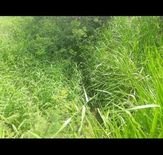 Linda Fazenda com 170 Hectares em Pureza só terra - Foto 4