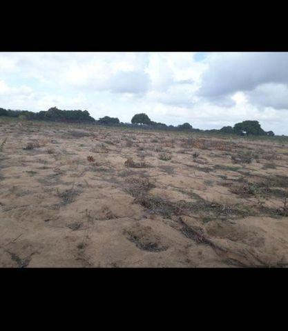 Linda Fazenda com 45 hectares na região monte alegre - Foto 3