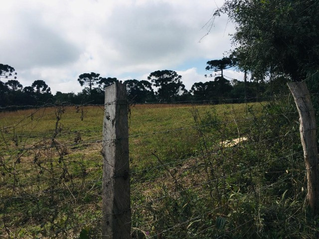 Área Rural em São José dos Pinhais - Foto 10