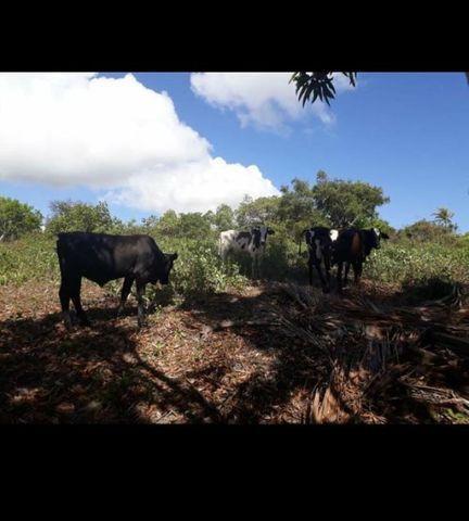 Linda Fazenda com 70 hectares na região de Ceará mirim com rio perene - Foto 12