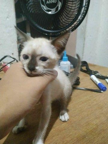 Doação de gatos  - Foto 5