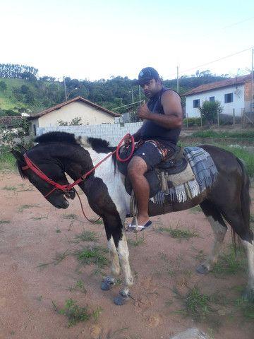 Cavalo Pampa faço catira em égua - Foto 2