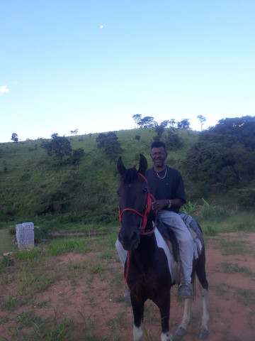 Cavalo Pampa faço catira em égua - Foto 3