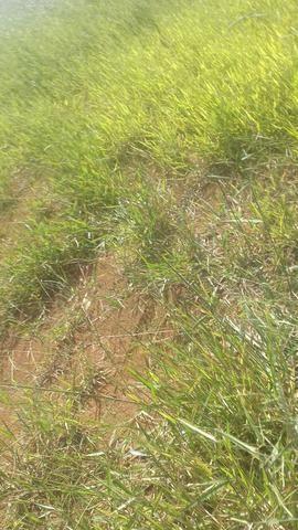 Terreno para granja condomínio enseada na represa joao penido - Foto 2