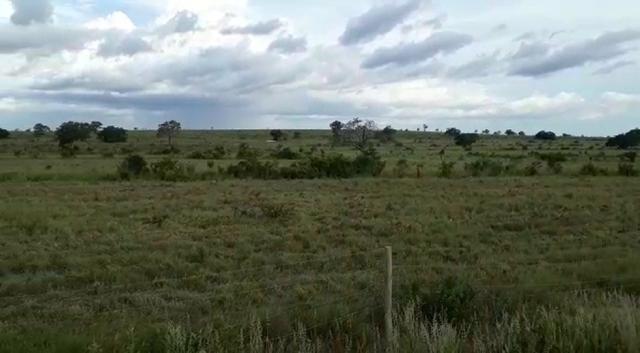 Fazenda de 853 hectares .400 hectares mecanizados . Colinas do Tocantins- TO - Foto 4
