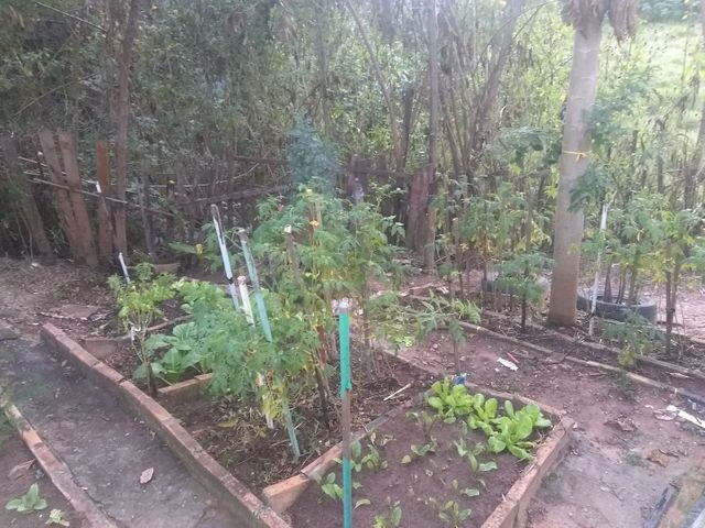 Terra adubada com adubo orgânico + esterco bovino $1,00 o kilo - Foto 3