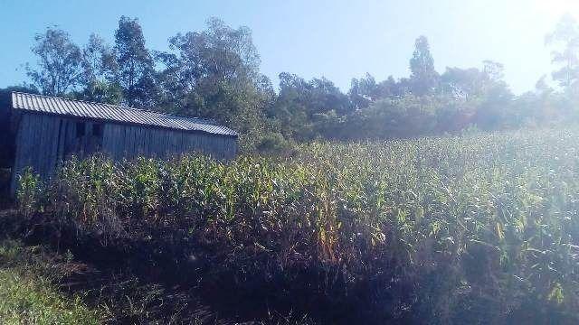 Bela chácara para plantação toda mecanizada, 5 km do asfalto - Foto 8
