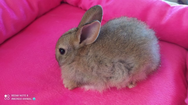 Filhote fêmea mini