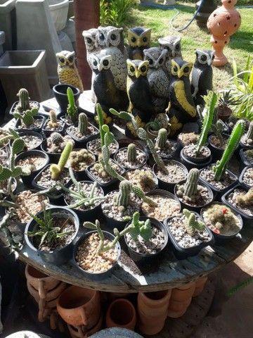 Tudo para seu Jardim  - Foto 4