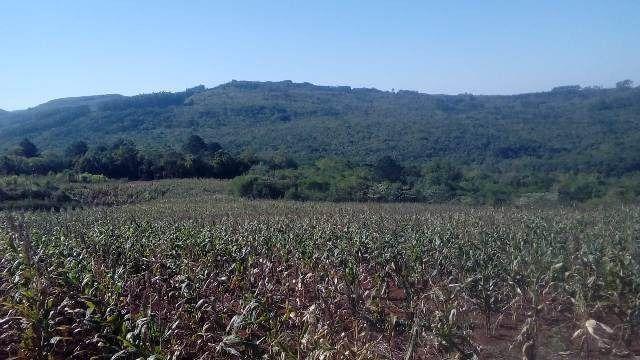 Bela chácara para plantação toda mecanizada, 5 km do asfalto - Foto 4