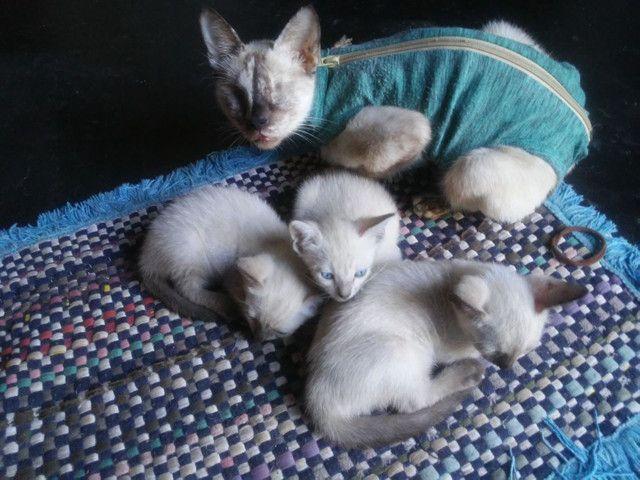 Doacao de gato - Foto 3