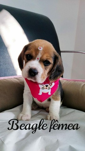 Beagle, levamos ainda hoje até você