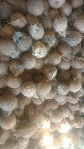 Coco seco de ótima qualidade - Foto 3