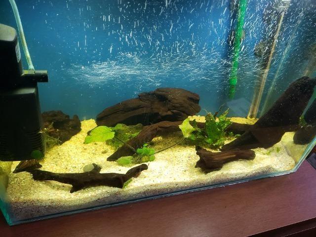 Troncos para aquário - Foto 3