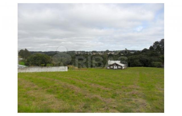 Terreno residencial à venda, vila torres i, campo largo - te0117. - Foto 6