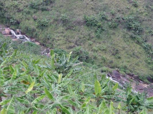 Fazenda com 80 hectares em Amaraji/Pe - REF. 286 - Foto 14