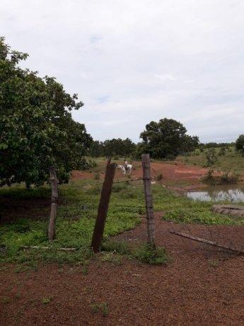 Fazenda 50alq Santa Maria PA 10mil o alq Tr x Casa em Palmas URG Airton - Foto 2