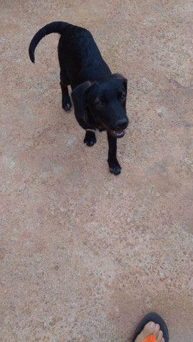 Doa_se cachorra porte pequeno 4 mês só falta a última varcina * - Foto 2