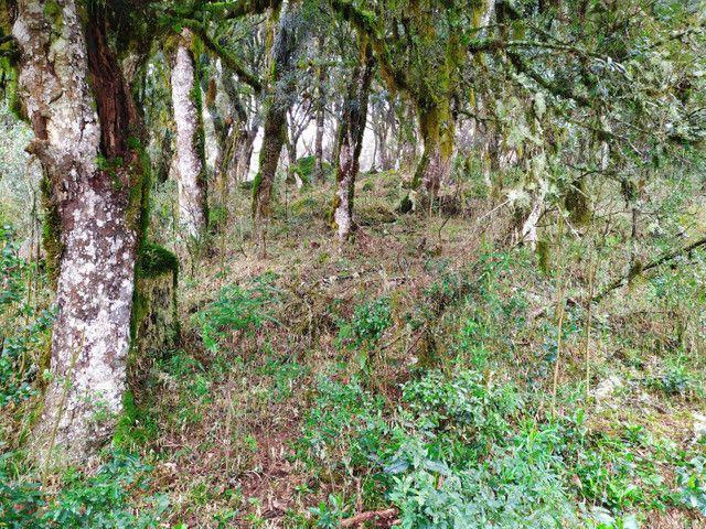 Lindo terreno em Urubici . ( Serra) - Foto 3
