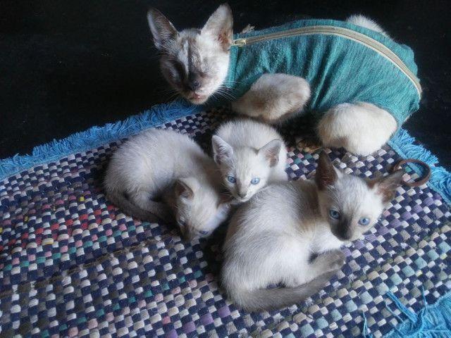 Doacao de gato - Foto 2