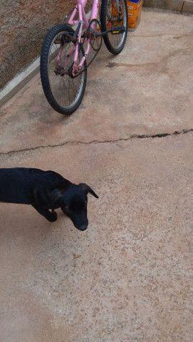 Doa_se cachorra porte pequeno 4 mês só falta a última varcina * - Foto 3