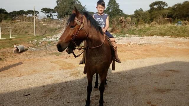 Cavalo Crioulo - Foto 2