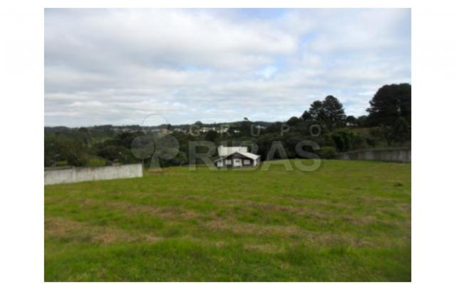 Terreno residencial à venda, vila torres i, campo largo - te0117. - Foto 10