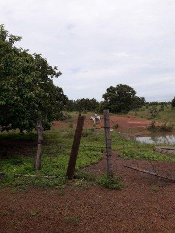 Fazenda 50alq Santa Maria PA 10mil o alq Tr x Casa em Palmas URG Airton - Foto 5