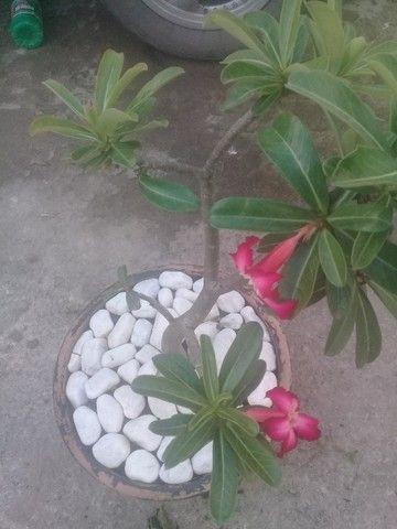 Dp.jardinagem  - Foto 2