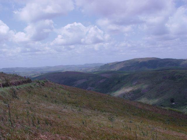 Fazenda com 80 hectares em Amaraji/Pe - REF. 286 - Foto 5