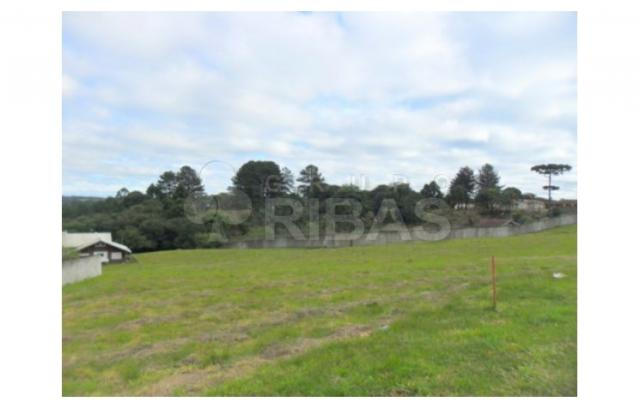 Terreno residencial à venda, vila torres i, campo largo - te0117. - Foto 8