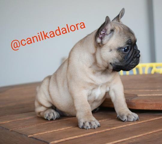 Filhotes de Bulldog frances com pedigree - Foto 2
