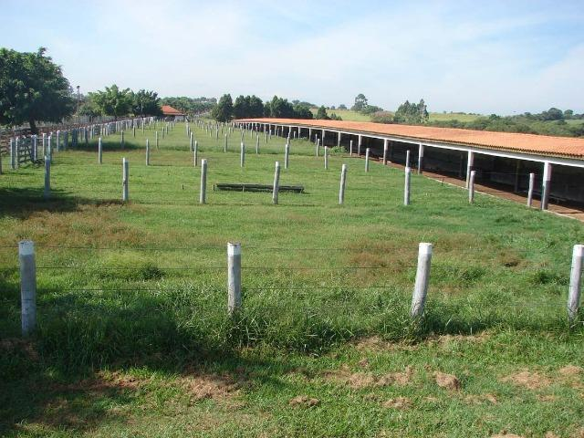 Fazenda 90 Hectares Prox. Sorocaba - Foto 13