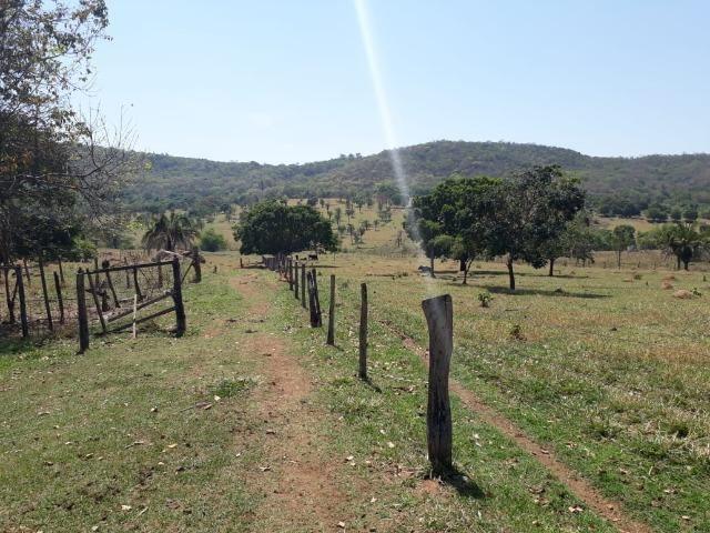 Terreno São Luis Montes Belos - Foto 3