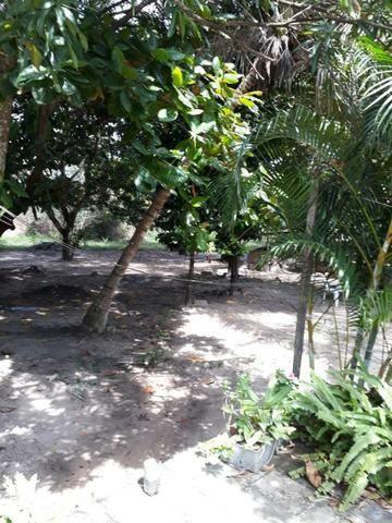 Sitio na Piçarreira - Vendo - Foto 5