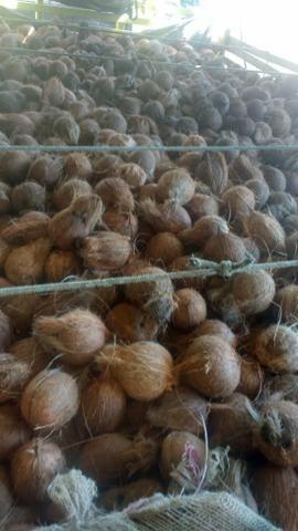 Coco seco de ótima qualidade - Foto 2