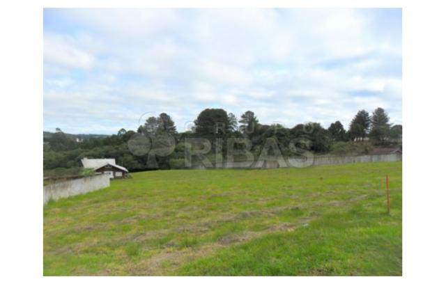 Terreno residencial à venda, vila torres i, campo largo - te0117. - Foto 7