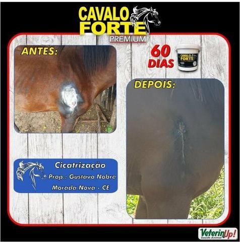 Suplemento para Cavalos