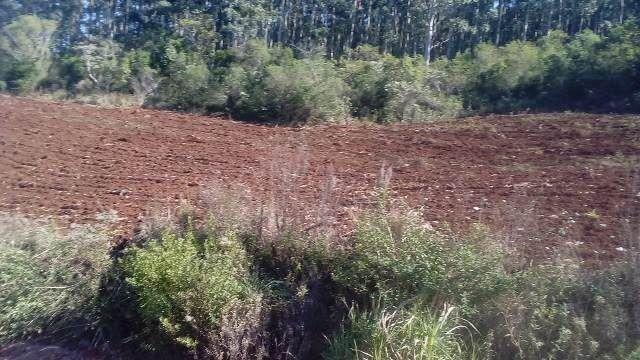 Bela chácara para plantação toda mecanizada, 5 km do asfalto - Foto 3