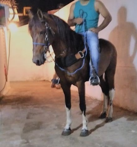 Cavalo andador