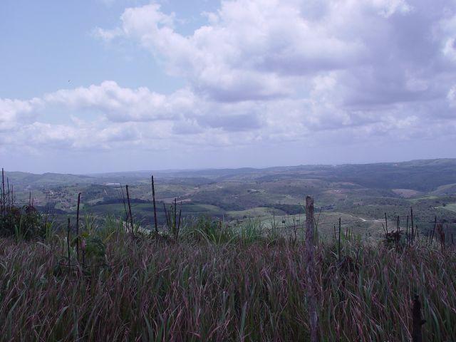 Fazenda com 80 hectares em Amaraji/Pe - REF. 286 - Foto 11